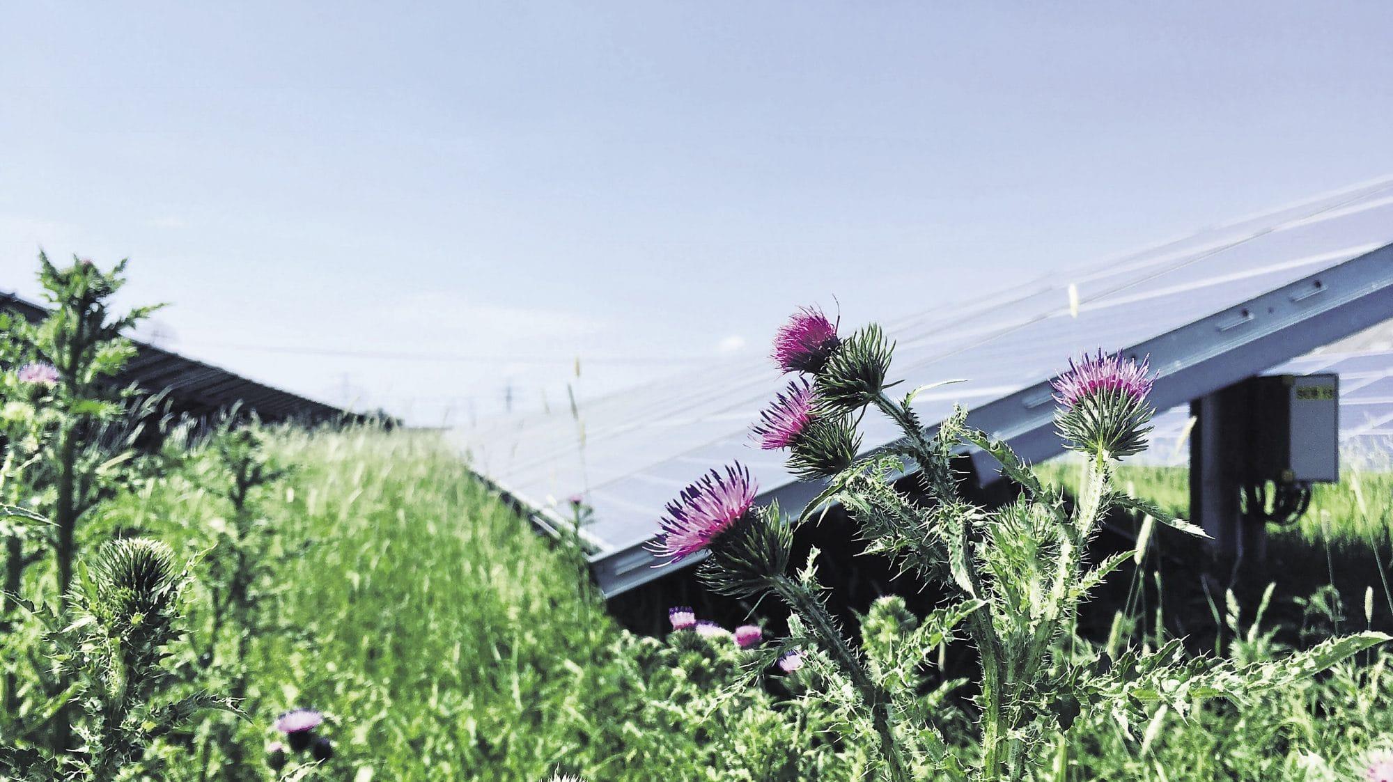 Vierverlaten Zonnepark  paradijs voor insecten